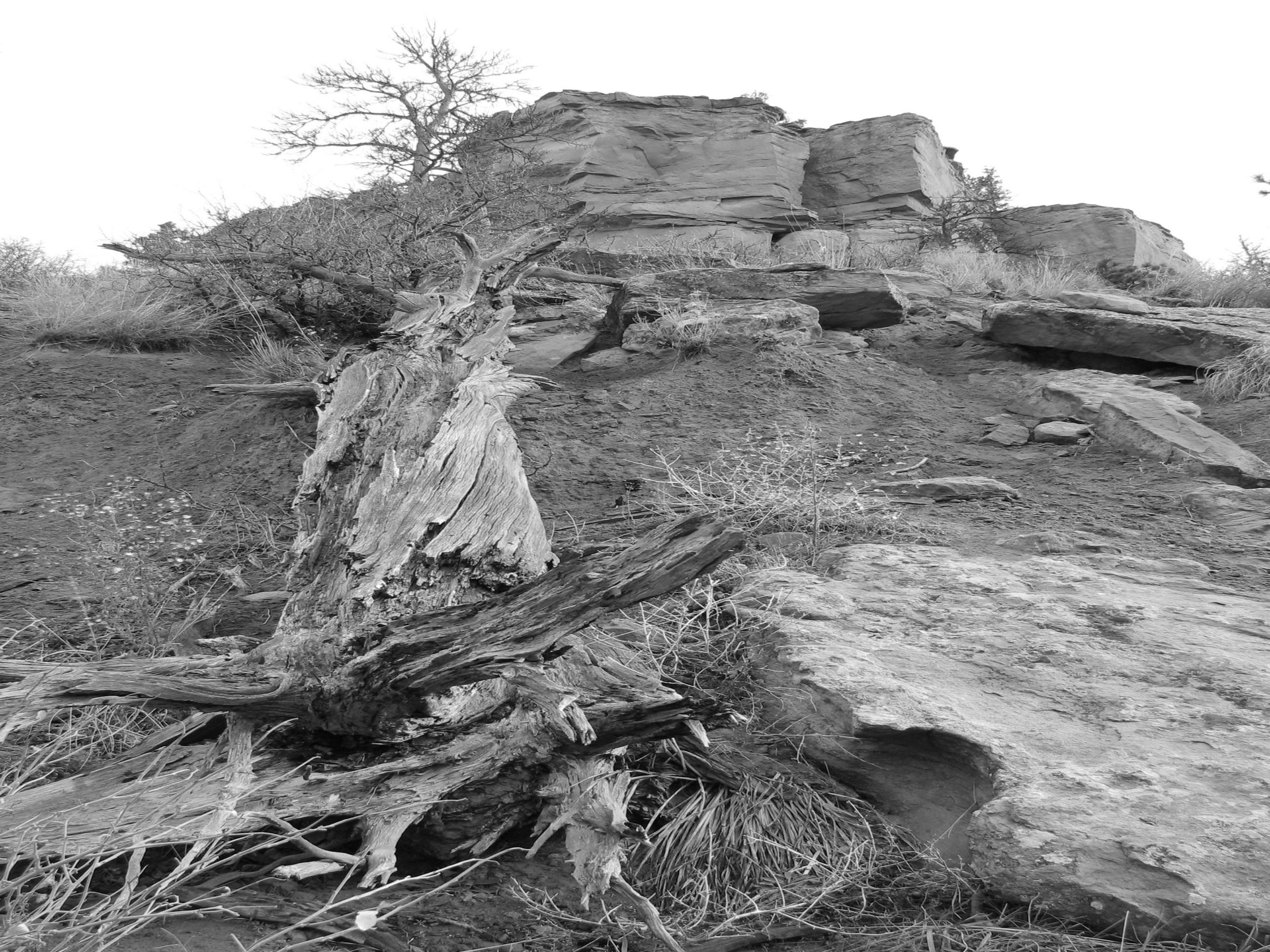 dead fall tree on rimrocks TinaWhitfield